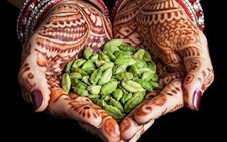 Produkte der Marke Ayurveda
